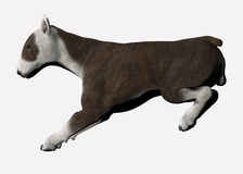 Bull terrier dog. Realistic 3d illustration of bull terrier dog seen in side view landing from jump; isolated on white background Royalty Free Stock Photography