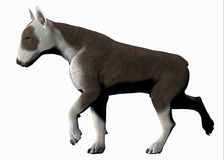 Bull terrier dog. Realistic 3d illustration of bull terrier dog seen in side view walking; isolated on white background Stock Photo