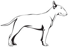Bull Terrier Dog. Vector illustration Royalty Free Stock Images
