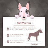 Bull terrier dog banner. Bull terrier breed dog banner with text. Vector Illustration Royalty Free Stock Photo