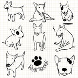 Bull terrier dog Royalty Free Stock Image