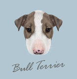 Bull Terrier Dog Portrait. royalty free illustration
