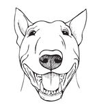 Bull terrier funny face Royalty Free Stock Photography