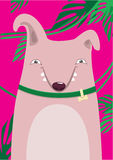 Bull Terrier. In green leaves on a pink background Royalty Free Stock Photography