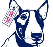 Bull Terrier Hot Dog Royalty Free Stock Photography