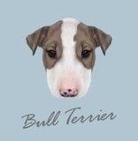 Bull terrier hundstående arkivfoto