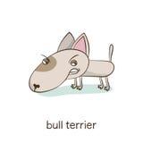 Bull terrier Hundtecken på vit Arkivbild