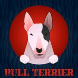 Bull terrier. Portrait in flat style. Vector Illustration Royalty Free Stock Image