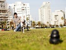 Bull terrier que corre para o brinquedo da mastigação no parque Fotos de Stock Royalty Free