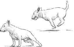 Bull terrier sketches Royalty Free Stock Photo