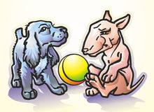 Bull terrier and spaniel. Pets spaniel puppies black and piebald bull terrier playing ball Stock Photography