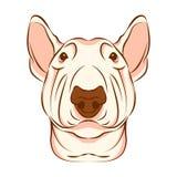 Bull terrier-vectorillustratie van het hond de hoofdgezicht Royalty-vrije Stock Afbeelding
