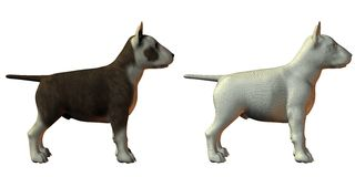 Bull terrior dog 3d model Royalty Free Stock Photography