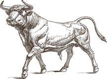 Bull. Vector drawing of the big farm bull Stock Photography
