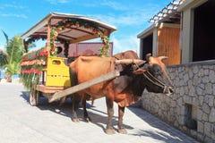 Bull-Wagen in Seychellen Stockbilder