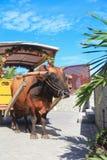 Bull-Wagen in Seychellen Lizenzfreie Stockbilder