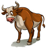 A bull Stock Photos