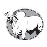 Bull zebu vintage logo Stock Images