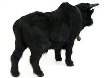 Bull03 Stockfoto