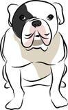 Bulldog. A calm bulldog is waiting sitting Stock Image