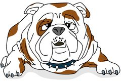 Bulldog. The bulldog relates to the stupid human character represented in the blunt face and dumb facial expressions Vector Illustration