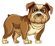 bulldog Fotografia de Stock Royalty Free