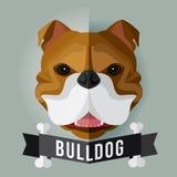 bulldog Fotografia Stock Libera da Diritti