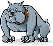 Bulldog. Vector illustration of a bulldog staring Royalty Free Stock Photos