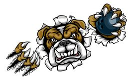 Bulldog Bowling Sports Mascot. A bulldog angry animal sports mascot holding a ten pin bowling ball and breaking through the background with its claws Royalty Free Stock Photography