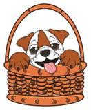 Bulldog in basket Stock Image