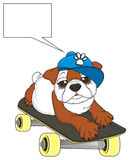 Bulldog in blue cap with skate and clean call out Royalty Free Stock Images