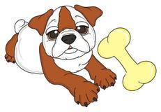 Bulldog with bone Royalty Free Stock Photography