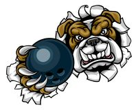 Bulldog Bowling Sports Mascot. A bulldog angry animal sports mascot holding a ten pin bowling ball and breaking through the background with its claws Stock Photography