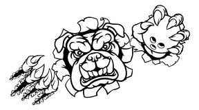 Bulldog Bowling Sports Mascot. A bulldog angry animal sports mascot holding a ten pin bowling ball and breaking through the background with its claws Stock Image