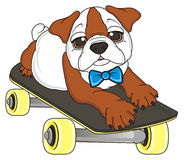 Bulldog boy riding on the skate Stock Image