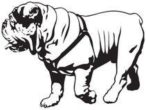 Bulldog, bulldog inglese o bulldog britannico illustrazione vettoriale