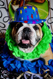 Bulldog at carnival. English bulldog dressed for the festivities of carnival in Brazil Stock Photography