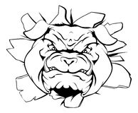 Bulldog character smashing out. An illustration of a cartoon tough bulldog character face tearing out of a wall Royalty Free Stock Photo
