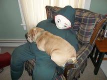 Bulldog che rannicchia con il boogieman fotografie stock