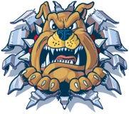Bulldog che strappa dal fumetto di vettore del fondo del metallo Fotografia Stock Libera da Diritti