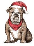 Bulldog with christmas hat Stock Photography
