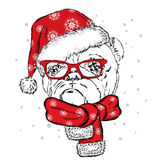 Bulldog in a Christmas hat and sunglasses. Cute puppy. Pedigree dog. W Stock Images