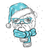 Bulldog in a Christmas hat and sunglasses. Cute puppy. Pedigree dog. W Royalty Free Stock Image