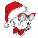 Bulldog in a Christmas hat and sunglasses. Vector illustration. Holiday card. New Year's and Christ Stock Images