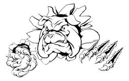 Bulldog claw breakthrough. A bulldog sports mascot or character breaking out of the background or wall Royalty Free Stock Photos
