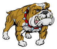 Bulldog clipart illustration Stock Images