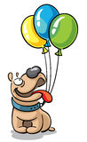 Bulldog with color balloons Royalty Free Stock Images