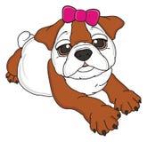 Bulldog con l'arco Immagini Stock