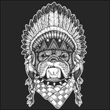 Bulldog Cool animal wearing native american indian headdress with feathers Boho chic style Hand drawn image for tattoo. Bulldog  Hand drawn vintage image for t Stock Photos