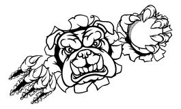 Bulldog Cricket Sports Mascot. A bulldog angry animal sports mascot holding a cricket ball and breaking through the background with its claws Royalty Free Stock Photography